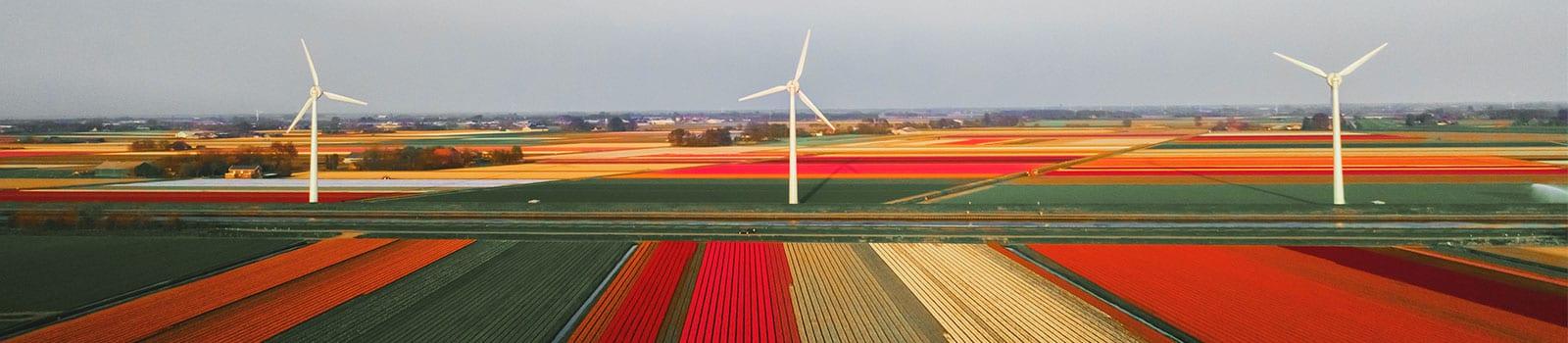 Incentive Reizen Nederland
