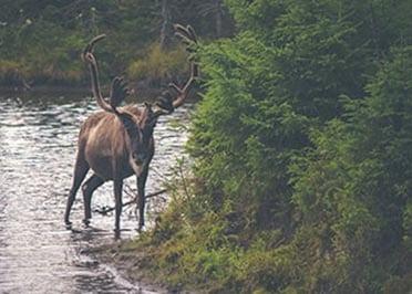 Incentive Reizen Lapland